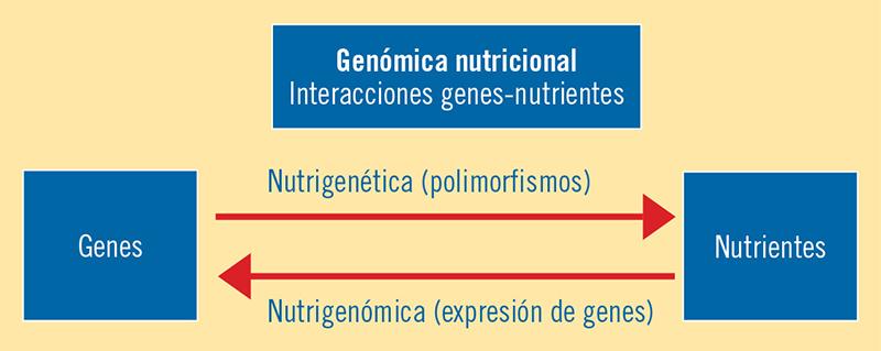Figura 1. Interacciones entre genes y nutrientes en la nutrigenética (secuencia) y la nutrigenómica (expresión). Modificada de Gillies, 2003