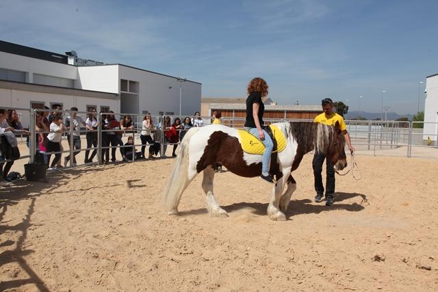 demostracion terapia caballos cie1