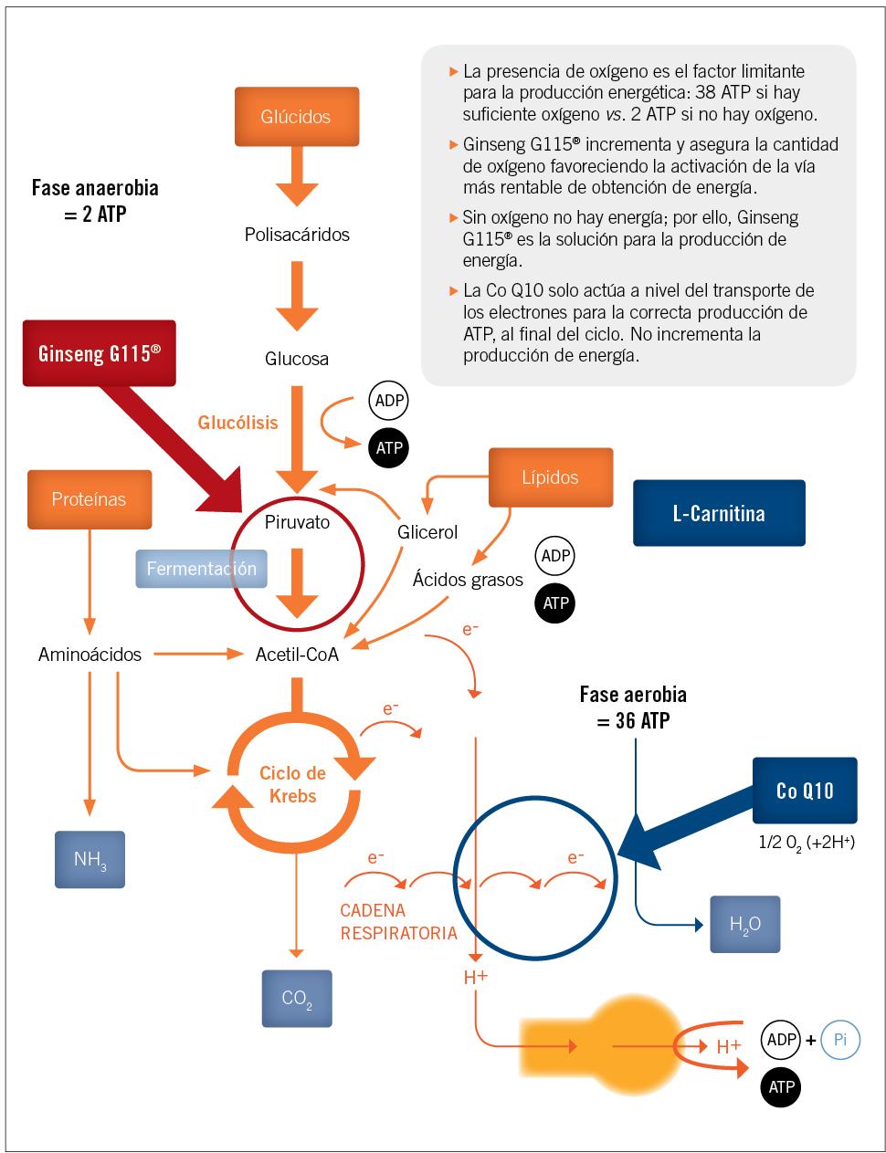 EF552 indicacion farmaceutica figura 2