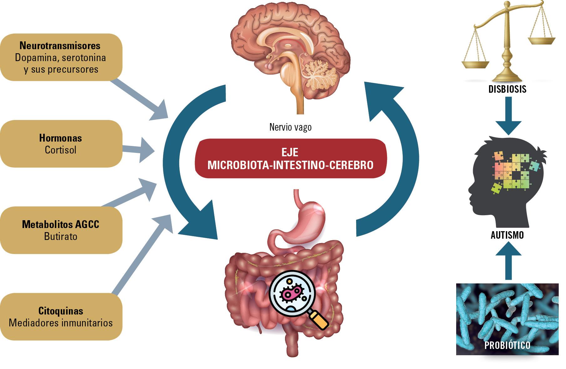 36 EF589 PROFESION microbiota probioticos y TEA figura 1