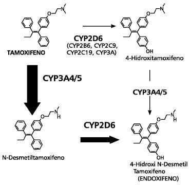 tamoxifeno metabolitos