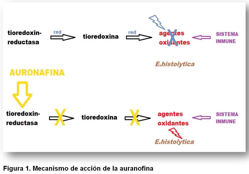 figura 1 auronafina