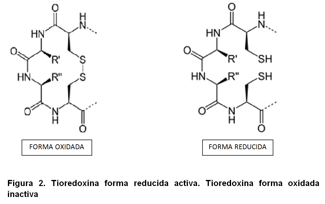 figura 2 auronafina